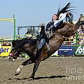Rodeo Bareback Riding by Bob Christopher
