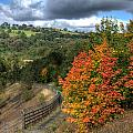 Bargoed Woodland Park by Steve Purnell