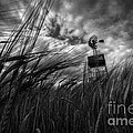 Barley And The Pump Mono by Rob Hawkins