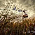 Barley And The Pump by Rob Hawkins