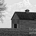 Barn And Tree In Black And White by Alan Look