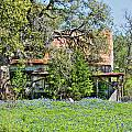 Barn In A Field Of Bluebonnets by Sarah Broadmeadow-Thomas