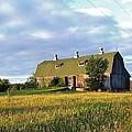 Barn In A Golden Field by Susan Wyman
