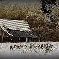 Barn In The Field by Travis Truelove