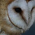 Barn Owl Closeup by Isaac Green