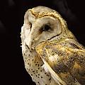 Barn Owl In A Dark Tree by Roena King