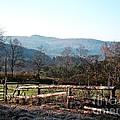Barnyard In The Morning by Christian Mattison