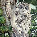 Barred Owl II by Greg and Linda Halom