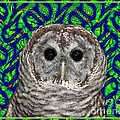 Barred Owl In A Fractal Tree by Rose Santuci-Sofranko