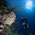 Barrel Sponge And Diver, Belize by Todd Winner