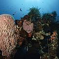 Barrel Sponge On Liberty Wreck, Bali by Todd Winner