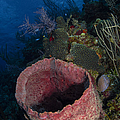 Barrel Sponge Seascape, Belize by Todd Winner