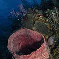 Barrel Sponge Seascape, Belize by Todd Winner