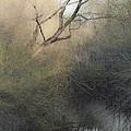 Barren Beauty by Kim Henderson