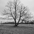 Barren Tree On A Winters Day by Catherine Conroy