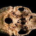 Base Of Skull 5, Sima De Los Huesos by Javier Truebamsf