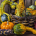 Basket Full Of Gourds by Garry Gay