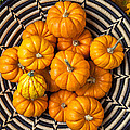 Basket Full Of Small Pumpkins by Garry Gay