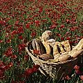 Basket Of Bread In A Poppy Field by Nicole Duplaix