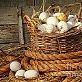 Basket Of Eggs On Straw by Sandra Cunningham
