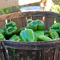 Basket Of Green Peppers by Mary McAvoy