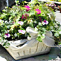 Basket Of Ivy And Flowers In The Sunshine by Elaine Plesser