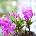 Basket Of Orchids by Juriah Mosin