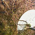 Basketball Hoop by Andersen Ross
