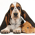 Basset Hound And Guinea Pig by Mark Taylor