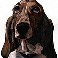 Basset Hound Named Coquette by Thomas Weeks