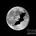 Bat Moon by Al Powell Photography USA