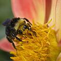 Bathing In Pollen  by Priya Ghose