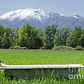 Bathtub On A Green Field by Mats Silvan