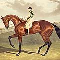 Bay Middleton Winner Of The Derby In 1836 by John Frederick Herring Snr