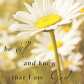 Be Still by Pam  Holdsworth