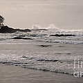 Beach At Tofino  by Vivian Christopher