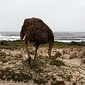 Beach Bird by Aidan Moran