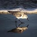 Beach Bird by Paulette Thomas