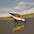 Beach Bird by William Bartholomew