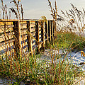 Beach Boardwalk by Dawna Moore Photography