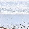 Beach Detail On Pacific Ocean Coast by Elena Elisseeva