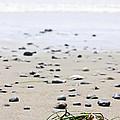 Beach Detail On Pacific Ocean Coast Of Canada by Elena Elisseeva