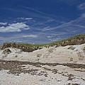 Beach Dunes by Betsy Knapp