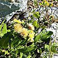 Beach Flowers by Tisha Clinkenbeard