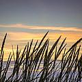Beach Grass by Bill Pevlor