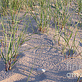 Beach Grass by Ted Kinsman
