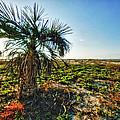 Beach Palm Morning by Michael Thomas