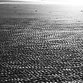 Beach Play by Douglas Barnard