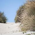 Beach Sand Dunes II by Michelle Wrighton