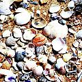 Beach Shells by Edgars  Gasperovics